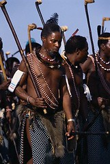 AB004701 (mythicpics) Tags: people men dancing barechested bare performingarts several blacks males customsandcelebrations adults carrying africans costumeclothingandfashion partiallynude traditionalclothing tribespeople ceremonialstaff mhlume ngunis swazis