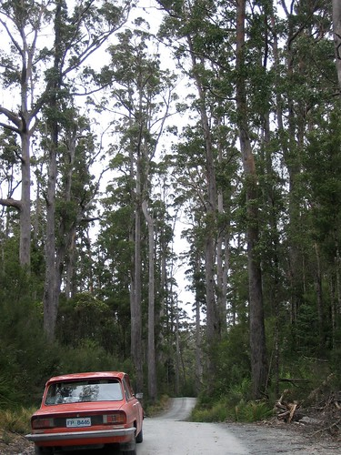 BOB in the forest on the Western Explorer