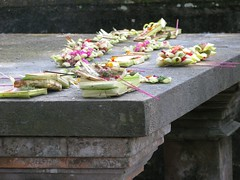Offerings by the banyan tree (AJA.dk) Tags: flowers bali offerings