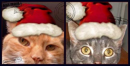 cats in santa hats