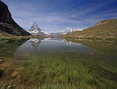 Riffelsee reeds (cfwee) Tags: switzerland zermatt matterhorn riffelsee