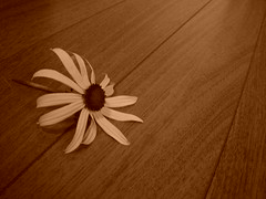 Flower on Wood (Silent Orchestra) Tags: wood flowers flower sepia silentorchestra floweronwood laughlovehope
