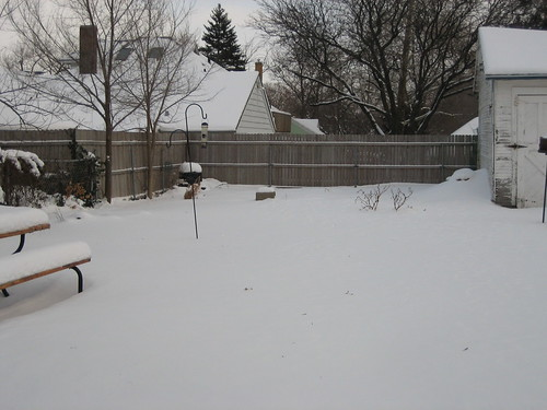The garden at -1 F