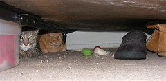 Xena & Abby hide under the bed while the windows are replaced