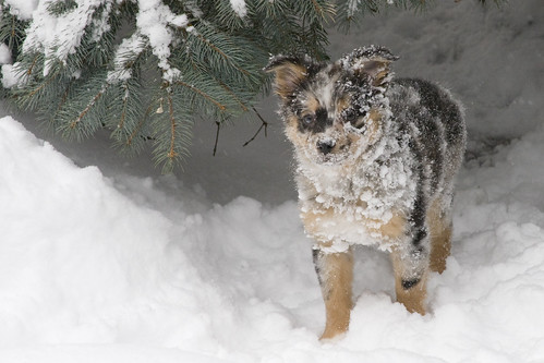 Snow Pup (by JnL)