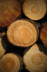 All these years! (stfnvd) Tags: tree nikon d70 boom years 18200 vr jaar dx helmond jaarringen stiphout
