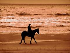 NorthSeaHorse (Tannenhuser) Tags: holland beach silhouette strand meer himmel northsea reiter nordsee pferd brandung gaul firmament