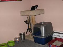 11-24-07 489 (teribul_teri) Tags: cat play kittens cuties