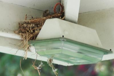 bird outside