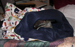 Pua in her snuggle sack