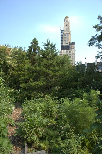 Brooklyn Bear's Garden