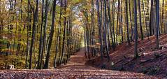 autumn walk (SpliX!) Tags: wien vienna canon eos 700d 2470 autumn herbst colours farben nature natur walk spaziergang bottom wood boden forest wald
