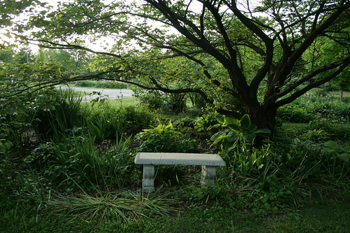 bench under the redbud tree