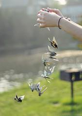 Cranes 2 (jules forrest) Tags: light girl paper golden newspaper hands bokeh cranes falling