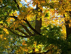 Golden (lefeber) Tags: autumn trees vacation fall leaves backlight vermont middlebury foliage powerlines eveninglight