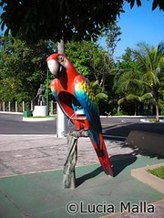 Orelhao Arara vermelha