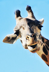 Zoo (Marielle B-R) Tags: br marielle reiersgard