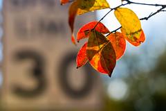 30 (olvwu | 莫方) Tags: shadow red usa macro sign 30 backlight ga georgia leaf bokeh savannah speedlimit redleaf jungpangwu oliverwu oliverjpwu olvwu jungpang 莫方 吳榮邦