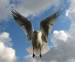 Mein Lieblingsfoto.... (   flickrsprotte  ) Tags: november sky clouds canon ilovenature wasser gulls wolken explore kanal mwe kiel 1110 holtenau superbmasterpiece vosplusbellesphotos