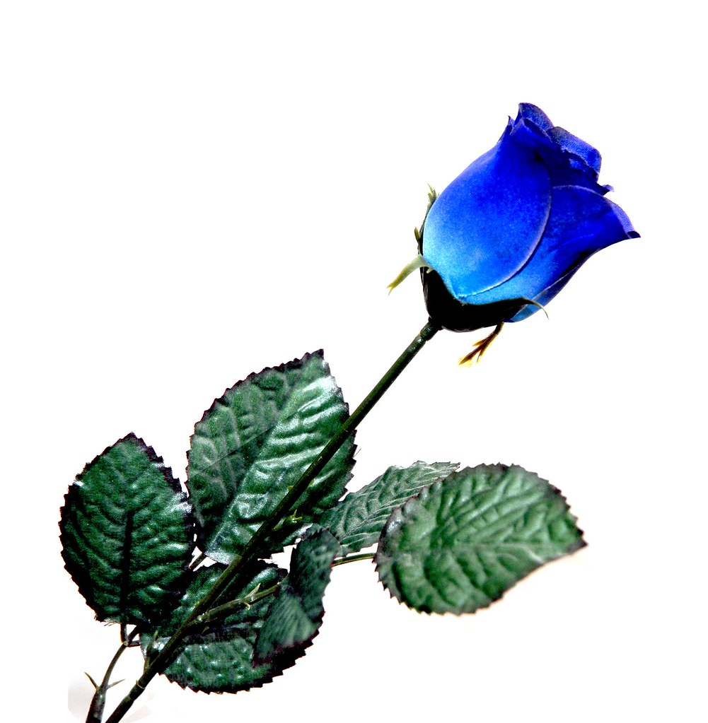 Blue Rose - album di IrishPics
