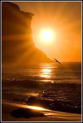 Radiance (down_the_rabbit_hole) Tags: ocean morning light sea sky sun seascape bird nature beautiful sunrise spectacular landscape gold dawn coast bravo waves seagull peaceful cliffs inspirational seashore soe tranquil themoulinrouge naturesfinest eo