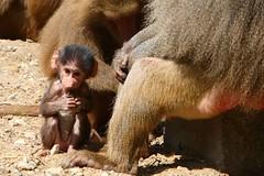 IMG_4687_emmen (Arie van Tilborg) Tags: zoo dieren emmen noorderdierenpark dierentuin mediacollege arievantilborg