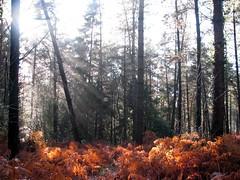 Bracken and sunbeams (Deeryme) Tags: naturesfinest scenicsnotjustlandscapes