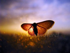 warming up (Jonathan Harel) Tags: winter macro window digital sunrise butterfly bug insect israel moth earlymorning transparency translucent supermacro warmingup thesilenceofthelambs insecta cotcmostfavorited explored mywinners platinumphoto img1860 powershots5is thesimplestthingsaresowonderfullyalluring