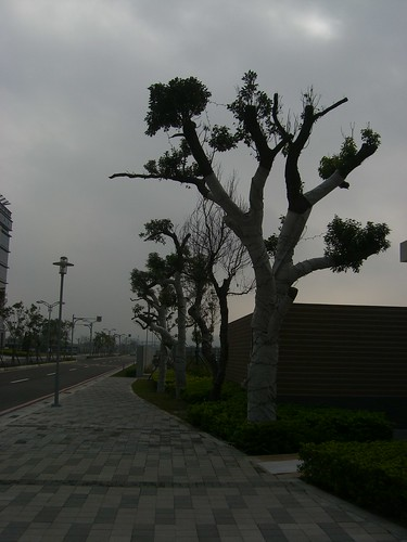 Trees in Office Campus