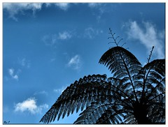 (_Margarida_) Tags: blue up azul silhouete palm palmeira silhoeta