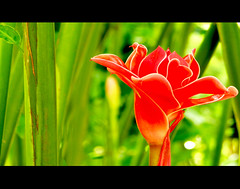 Another World ... (whossein) Tags: red black flower macro green canon flora singapore close vivid while botanicgarden golddragon mywinners abigfave impressedbeauty superbmasterpiece canonpowershots5is