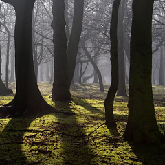 The Sleepy Hollow (BarneyF) Tags: park shadow mist tree nature silhouette liverpool landscape sleepyhollow sefton firstquality betterthangood