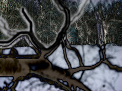 Spirit of Winter Wood (Fractal Artist) Tags: wood winter snow abstract altered woods spirit dreams branching