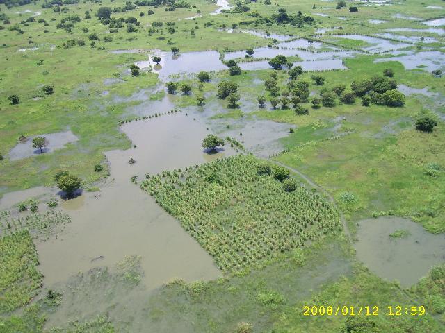 zambezi 10