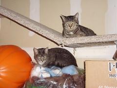 Jinx and Chunky (sllieder) Tags: pets jinx chunky