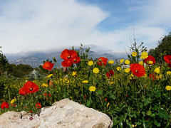 poppies and the Els Ports (Marlis1) Tags: flowers red spain poppies wildflowers 365 elsports weatherphotography abigfave marlis1 extremered