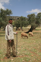 A shepherd and his flock (hazy jenius) Tags: world trip nature rural israel globe war peace tour village shepherd palestine westbank muslim middleeast photojournalism arab olives conflict promisedland israeli socialdocumentary settler occupation milkandhoney fiields yanoun yanun