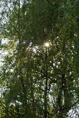 Starburst through Branches (josephpaul73) Tags: nikond100 d100 70300mmf4556gvr nikkor70300vr