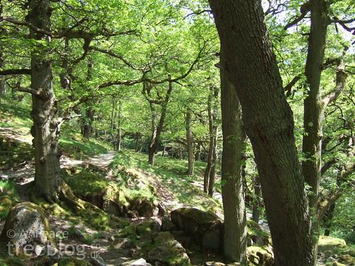 sunny oak woodland