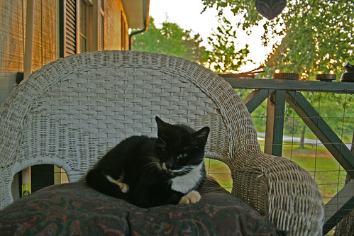 Osiris Rests at Sunset - IMG_1112