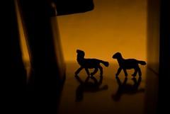 rencontre fatale #01 (Nicola Cipriani (I'm back)) Tags: new trip autumn light black color art colors beautiful animal animals night photography lights visions reflex cool nikon artist noir colours colore photographer shadows place artistic photos expression faith picture photographers explore vision passion romantic portfolio oniric autunno cipriani amore nocturne notte rencontre lightroom rencontrefatale nicolacipriani 2008stilleben