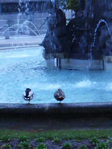 random_ducks