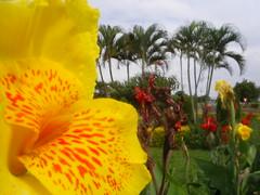 09 flores nosso trevo echapora (nilgazzola) Tags: brazil brasil de foto ou com tirada maquina echapora nilgazzola