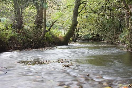 River Lyd at Brandis Wood