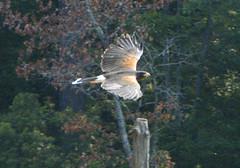 Bird 15408