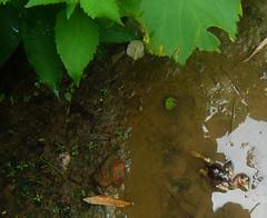 The End at the Beginning (yeasmine.khalique) Tags: life nature death babybird bestnaturetnc07