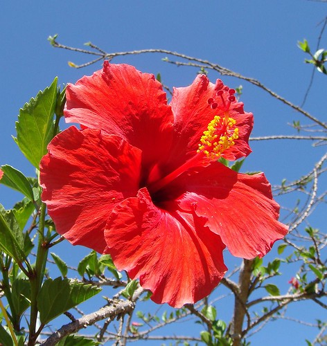 Hibiscus! by Rana Pipiens