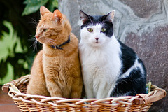 Friends (sausyn) Tags: friends red cats brown white black cat basket nemo brothers sharing wicker amici rosso bianco nero gatti cesta fratelli blueribbonwinner kissablekat bestofcats impressedbeauty kittyschoice diamondclassphotographer flickrdiamond mailciler