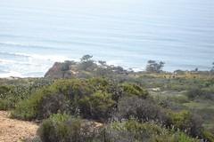 Torrey Pines (beetlebum1277) Tags: torreypines pines torrey