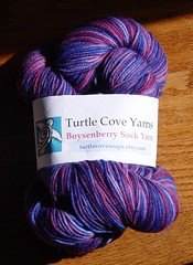 turtle cove boysenberry in sunshine